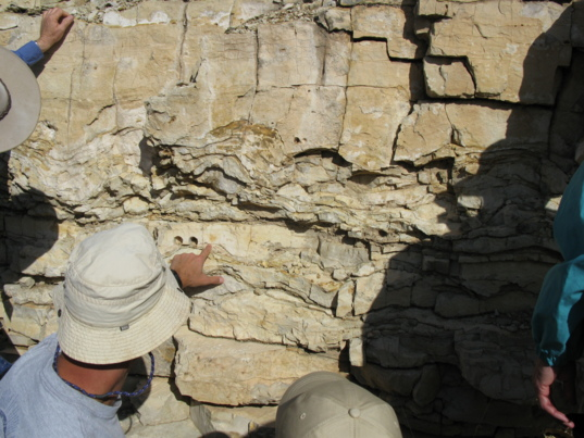 Fossil stromatolites