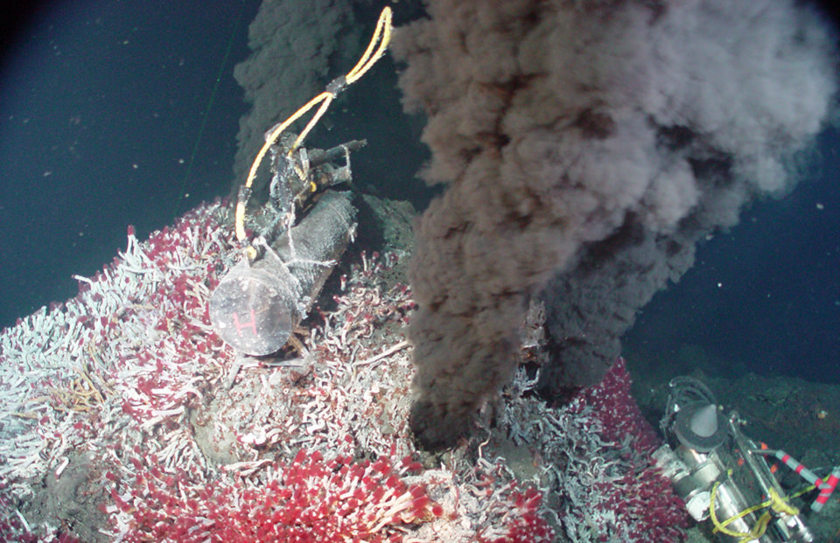 Hyrdothermal vent and tube worms