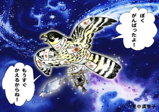 Hayabusa, peregrine falcon