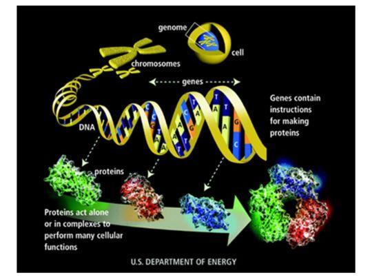 Basic mechanisms of biochemistry