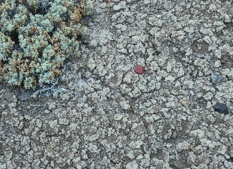 Smectite on Earth