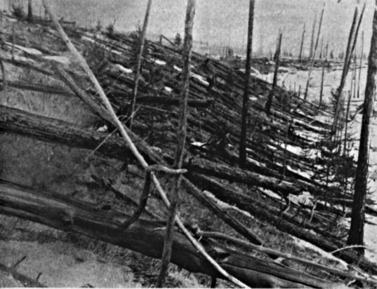 Trees leveled by Tunguska Impact