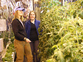 Amy and Jani admire the tomato crop