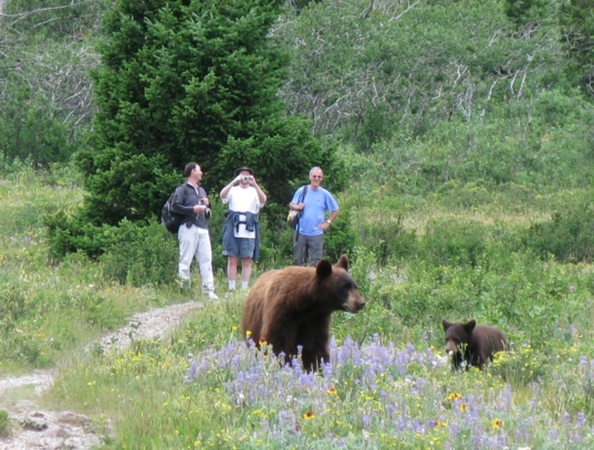 My adviser and two colleagues and a family of bears