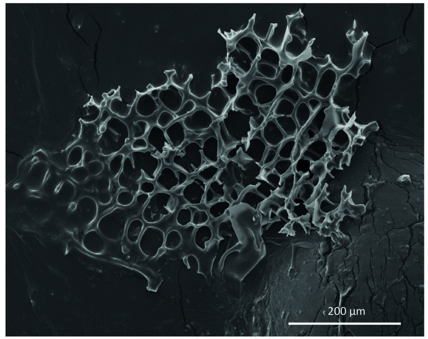 Cryogenic opal-A