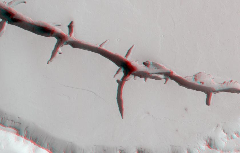 Closeup on a Cerberus fossa