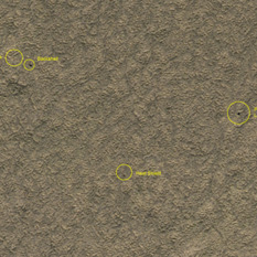Phoenix landing site monitoring from HiRISE: May 7, 2010