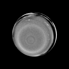 Uranus (high pass filter + contrast stretch)