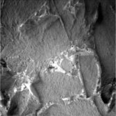 Tiny veins running through the Whitewater Lake outcrop imaged by Opportunity