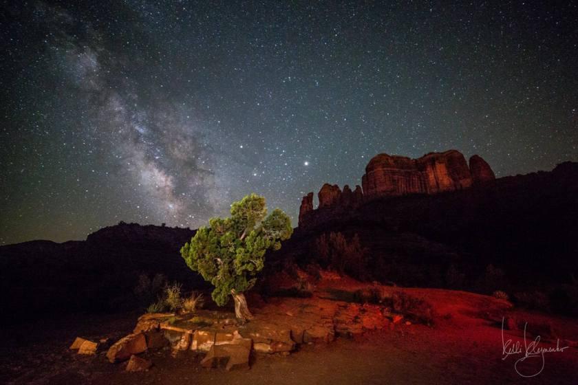Juniper Under the Stars