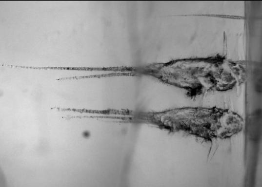 Impact tracks in aerogel