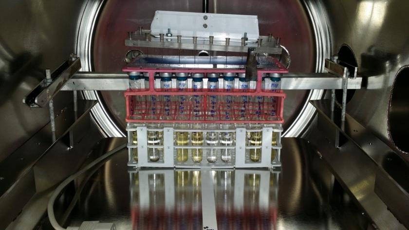 Bacterial samples in the Pegasus Mars chamber