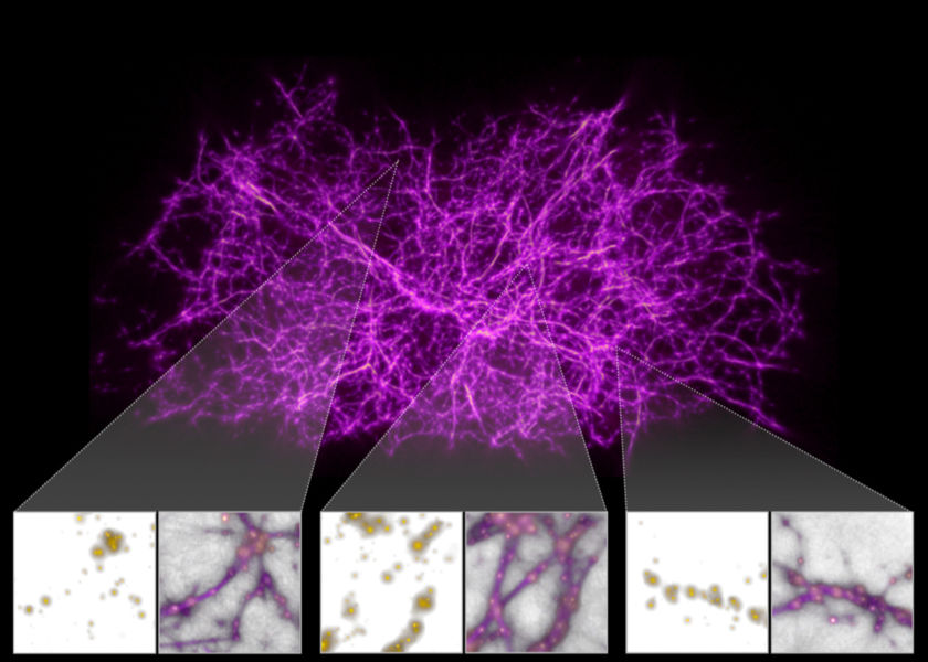 Reconstruction of the cosmic web