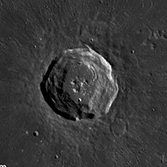 Harpalus crater