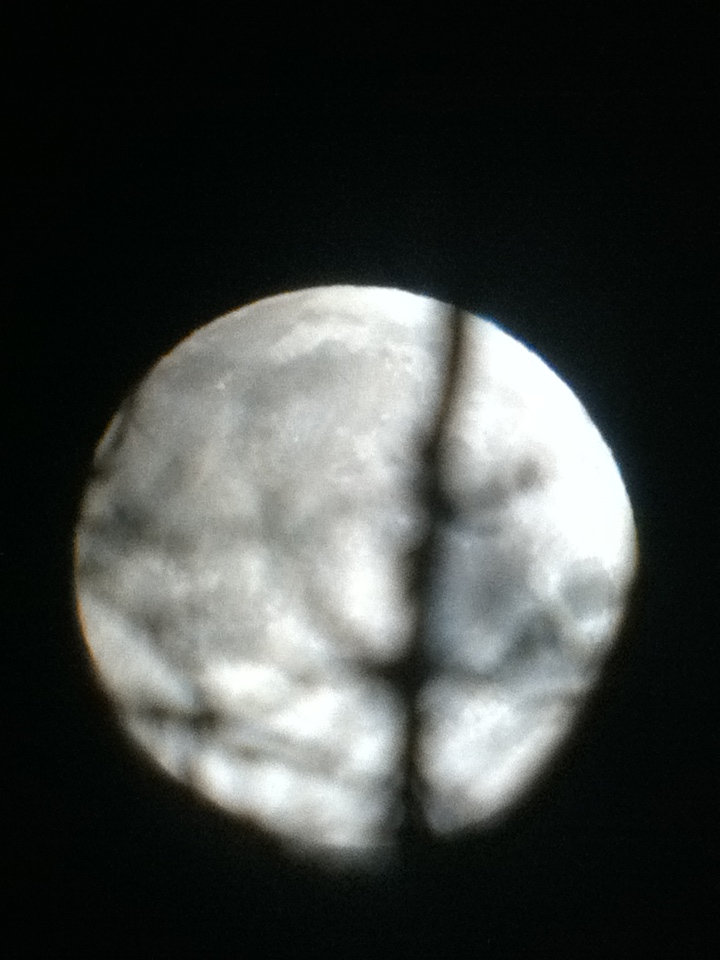 Moon behind a tree branch- 5/5/12