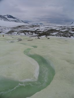 Sulfur spring at Borup Fiord Pass