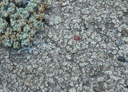 Smectite clays on Earth (closeup)