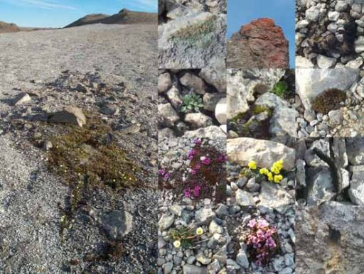 A montage of plant and animal life I've seen while I've been up here